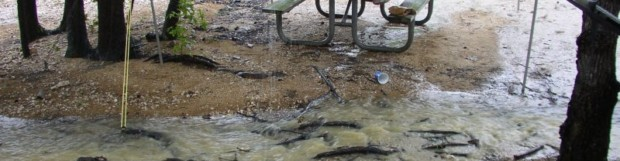 HIGH WATER AT KERR DAMPENING 25% OF NC CAMPSITES FOR MEMORIAL WEEKEND