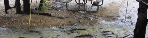 HIGH WATER AT KERR DAMPENING 25% OF NC CAMPSITES FOR MEMORIAL WEEKEND
